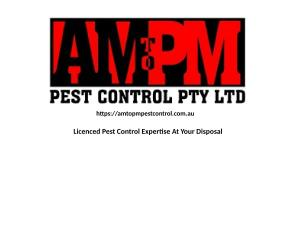 AM to PM Pest Control