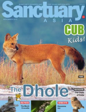 Sanctuary Cub November 2013
