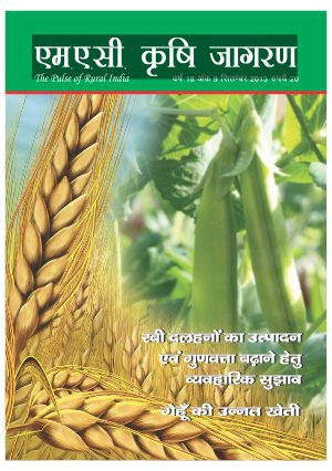 SEPTEMBER 2013 (Hindi Edition)