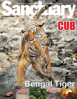 Sanctuary Cub