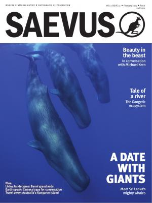 SAEVUS FEB 2015 - Read on ipad, iphone, smart phone and tablets.