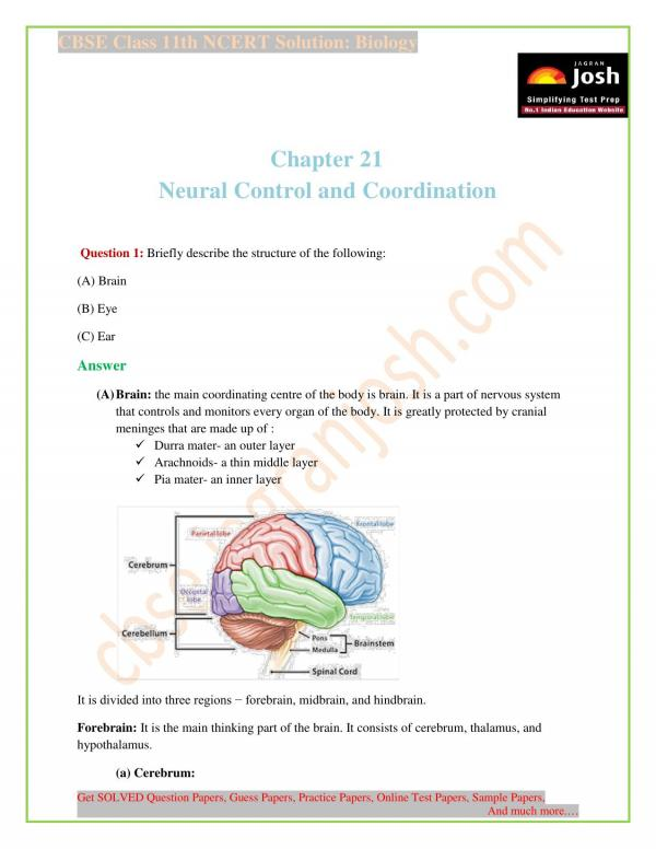 CBSE : NCERT Solutions for Class 11th Biology Chapter 21 Neural