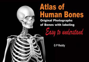 Atlas of Human Bones